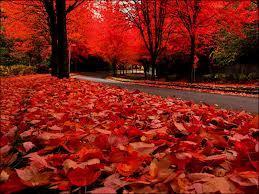 autumn 2013