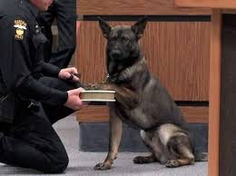 dog witness